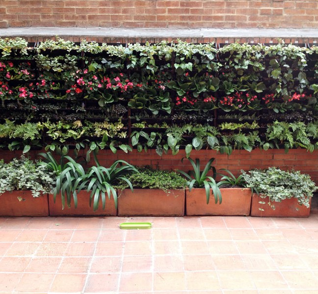 Plantas que se pueden utilizar en jardines verticales for Plantas utilizadas en jardines verticales