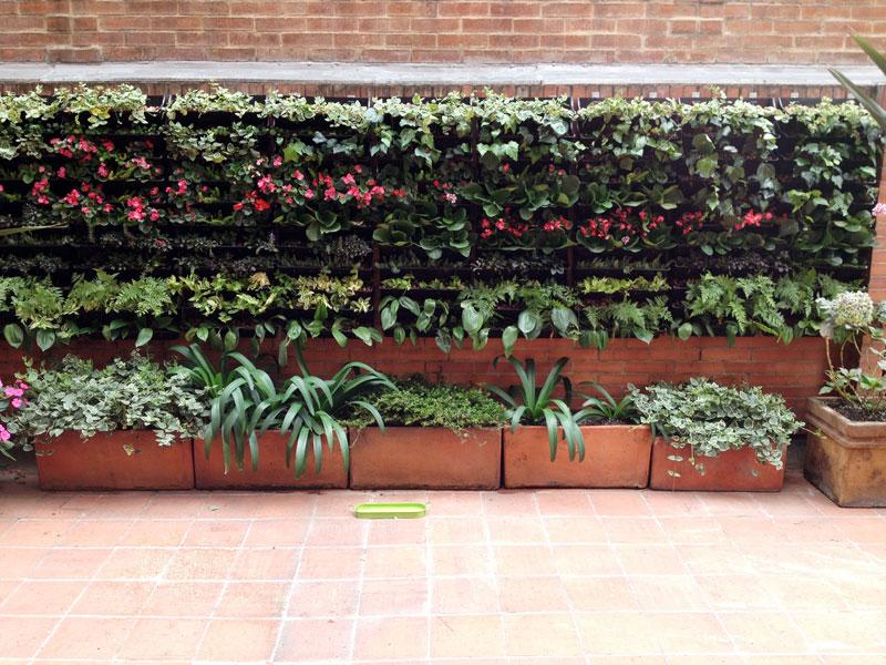Plantas que se pueden utilizar en jardines verticales for Jardines en paredes