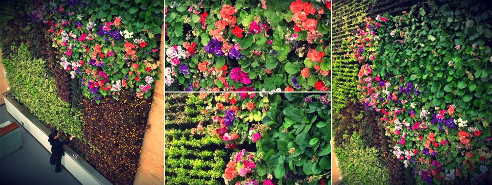 Jardines verticales y techos verdes ecotelhado colombia for Como hacer un jardin vertical casero y economico