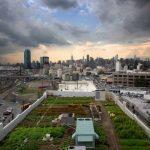 Brooklyn Grange Huerta Urbana en NY