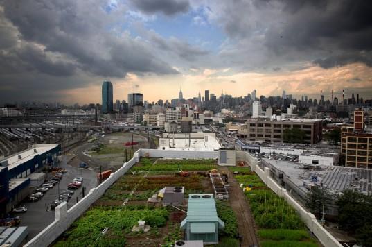 En esta huerta urbana podemos obtener hortalizas frescas, frutas y hierbas aromáticas entre otras.