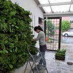 Descubre las ventajas de la agricultura vertical
