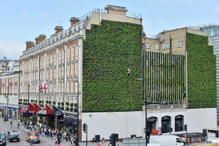 hotel palace jardin vertical Tiene 21 metros de alto y se compone de diez mil plantas,