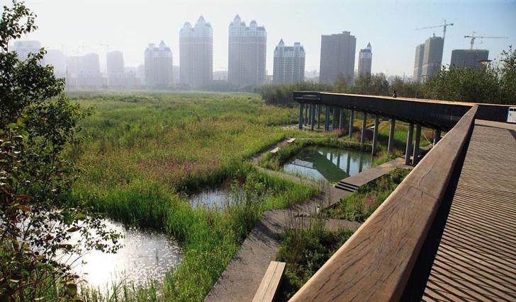 Infraestructura Verde Urbana