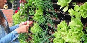 Huertas Urbanas. La clave para la seguridad alimentaria.